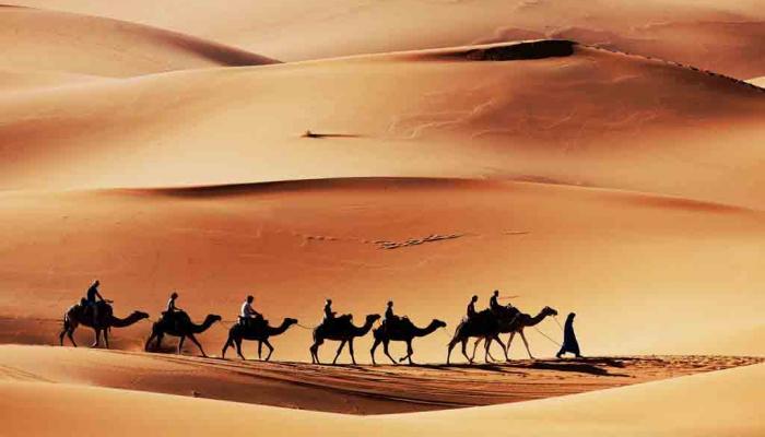 karavaan met kamelen trekt door de woestijn