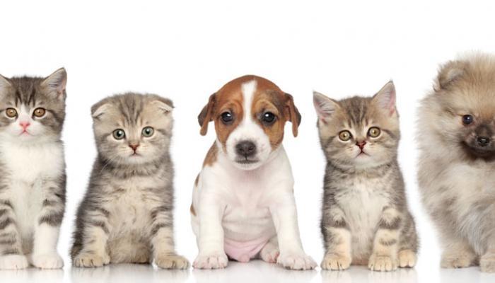 katten en honden