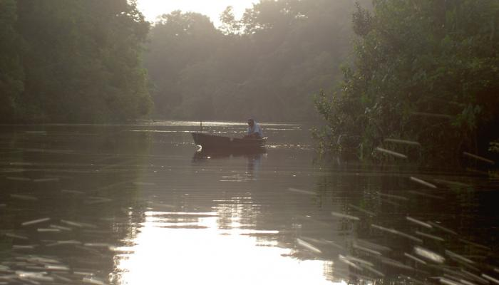 bootje varend op rivier in bos